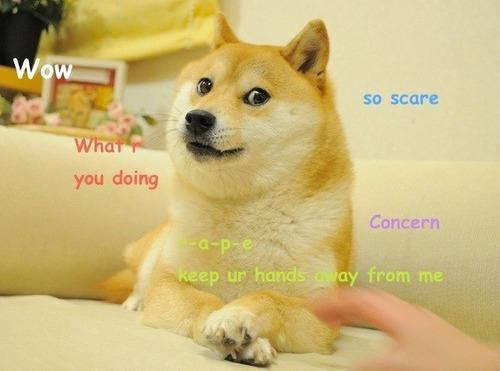 The original Doge meme, which would soon be adapted countless times.